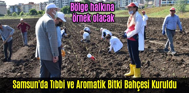 Samsun'da Tıbbi ve Aromatik Bitki Bahçesi Kuruldu
